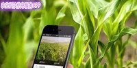 最新农业科技信息服务APP大全