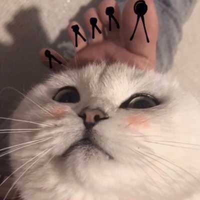 抖音可爱猫咪情侣头像