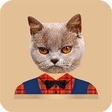 猫头贴纸v1.0