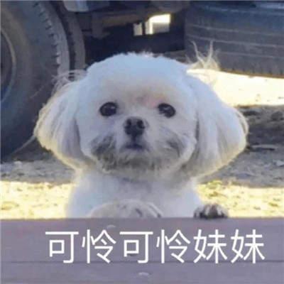 狗狗沙雕表情包